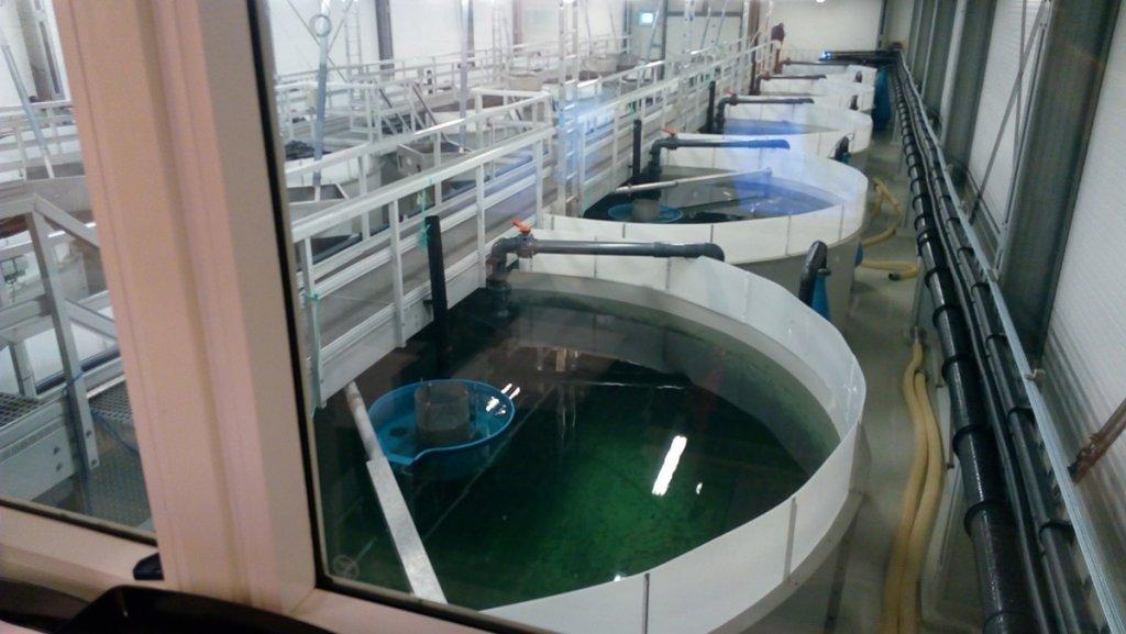 Fish hatchery AMCON sludge dewatering solution