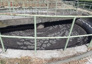 Activated sludge at WWTP TAT